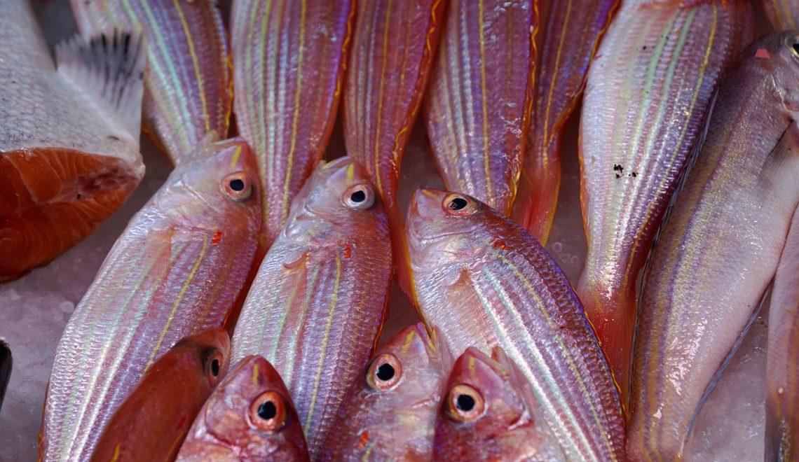 Crianças: comam mais peixes!
